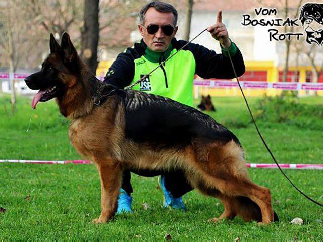 2x VA1 BiH Wikky von Farhantal IPO 1 1200px